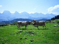 The Appenzellerland is very traditional Switzerland!